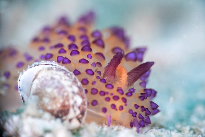macro shot nudibranch