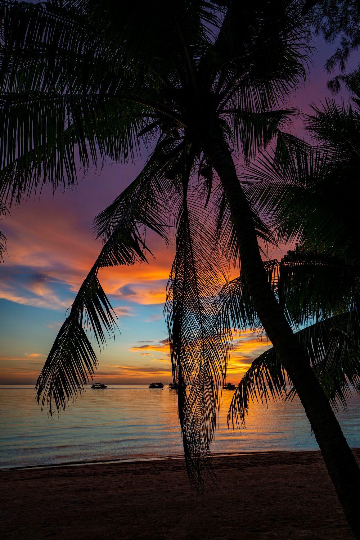 sunset sairee palm tree