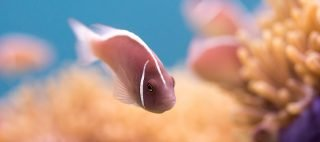 Thailand underwater videography course