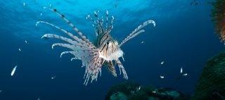 Underwater photography training in Thailand