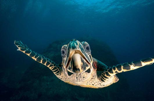 Underwater photography training