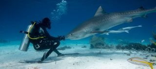 Underwater photography and videography expeditions
