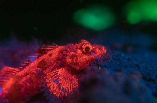 UV fluorescence underwater phoography