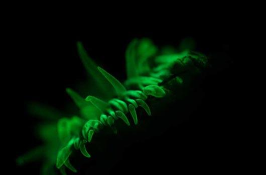 UV fluorescence underwater video course