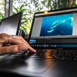 Underwater photography editing