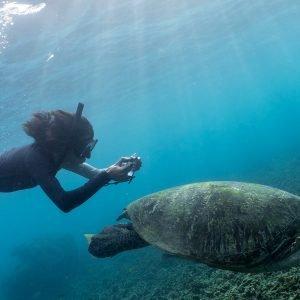Koh Tao Turtle Documentary by Oceans Below student Lucien